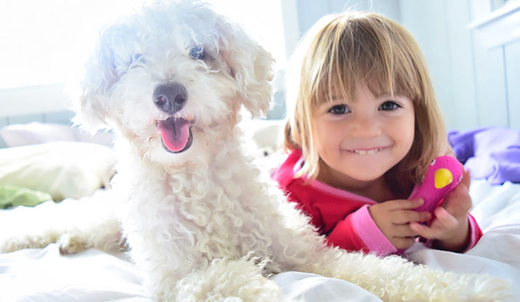 61 percent of Canadians cohabitates with a pet