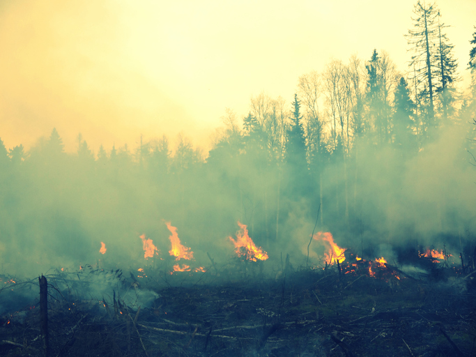 forest fires affect air quality