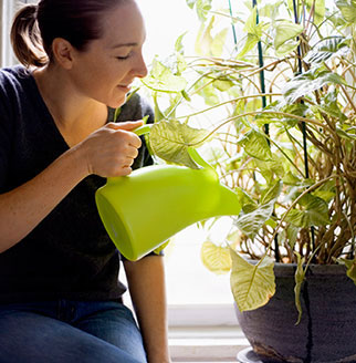 houseplants can help improve the air in your home